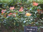Gyoen_091012_5