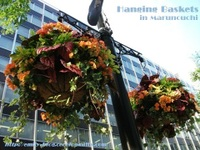 Hanging_baskets3