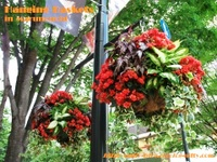 Hanging_baskets4