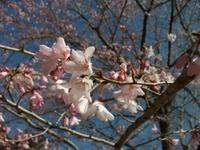 Sakura_110401b_3