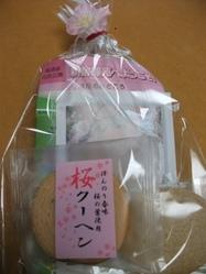 Sakura_110416c