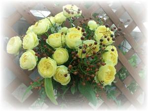 Roses18_2