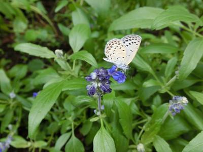 Wildflower01