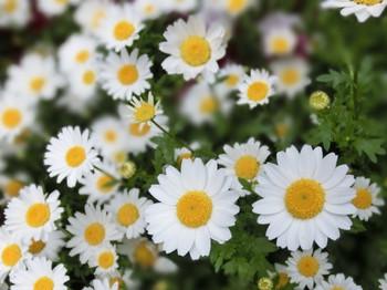 Spring_flowers02