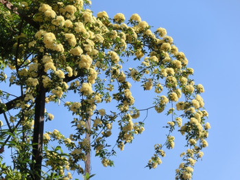 Spring_flowers05