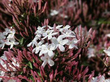 Spring_flowers07
