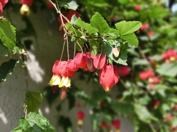 Spring_flowers08