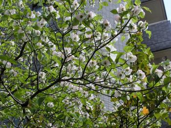 Spring_flowers09
