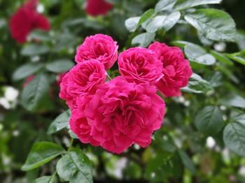 Spring_flowers20