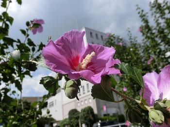 Sep_flower03