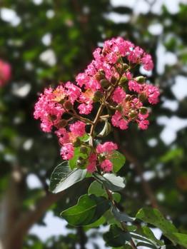 Sep_flower04