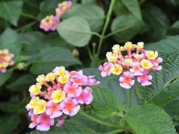 Sep_flower15