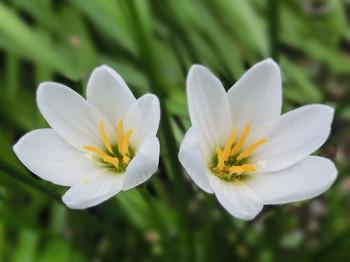 Sep_flower16