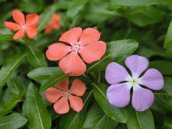 Sep_flower17