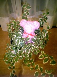 恋愛グマの植物